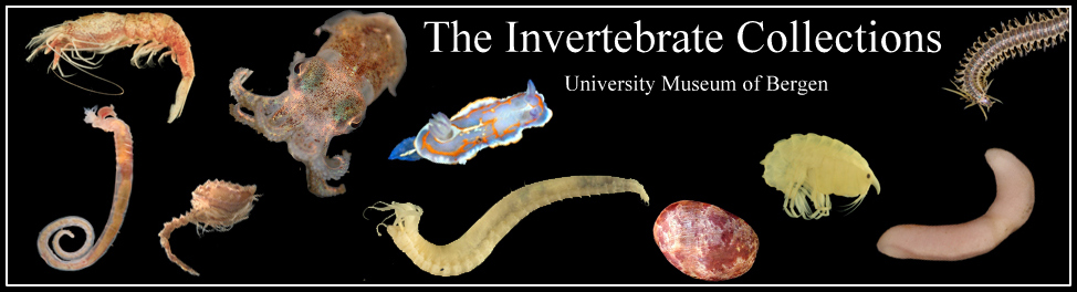 The Invertebrate Collections