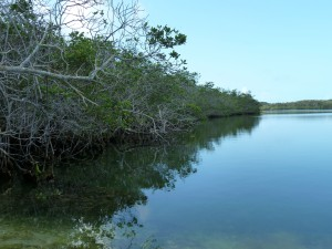 Turtle Pond; Eulethera I., The Bahamas