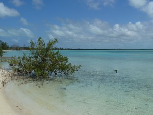 A sand flat lined by mangroves; Eulethera I., The Bahamas