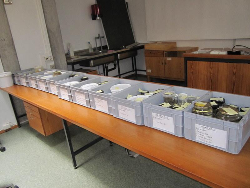 Many samples