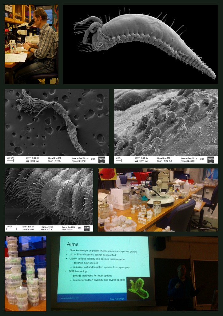 Work in the lab, SEM photos of complete animals and of tiny details, talks and stacks of material. (Pictures by A. Mackie and K.Kongshavn)