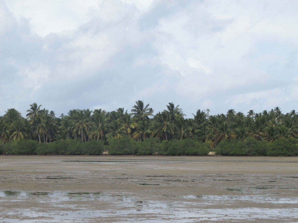 A sand flat lined with mangroves and coconut trees (Barra estuary, Inhambane, Mozambique)