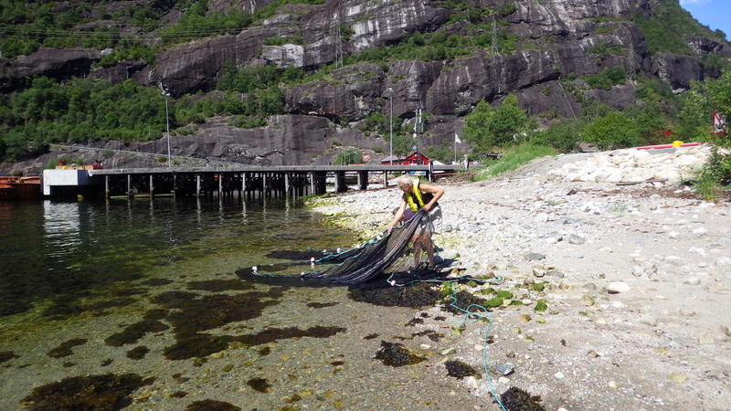 Netting for fish in the littoral zone
