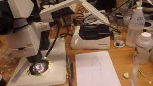 Preparing drawings using a camera lucida on the stereo microscope