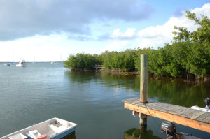 A mooring area with lined by mangroves with the bottom covered by seagrass and algae (Key Largo)