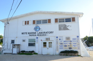 The lab building at Mote (summerland Key)