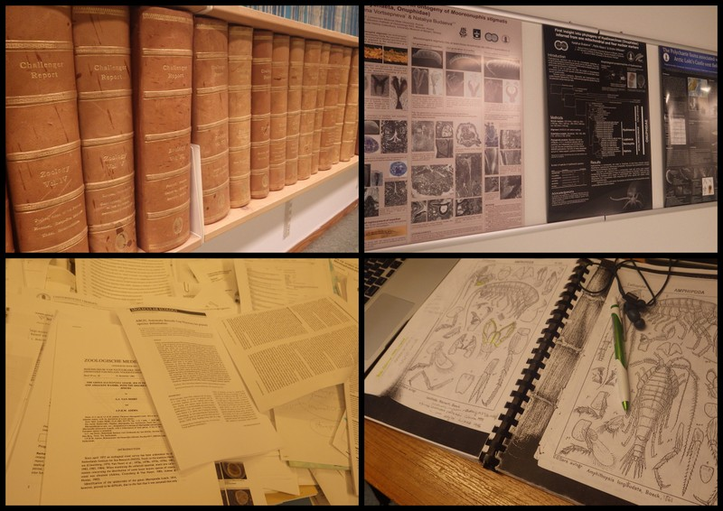 Scientific publications: From leather bound tomes to printouts, taxonomic keys in frequent use, presentations and posters