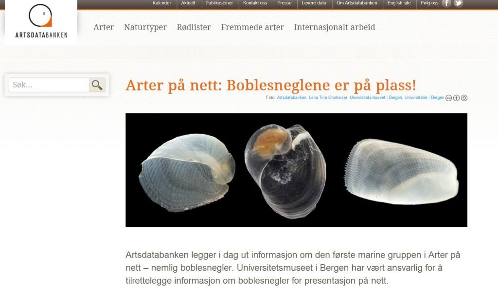 arter på nett_boble