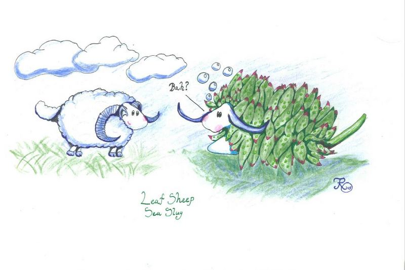 Regular sheep vs Leaf Sheep Sea Slugs (ill: T.R. Oskars)