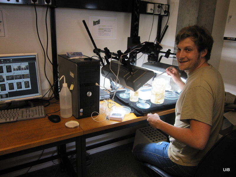 Jon, one of the PhD-students at BIO, examining the type specimens of the sponge Chondrocladia (Chondrocladia) michaelsarsi