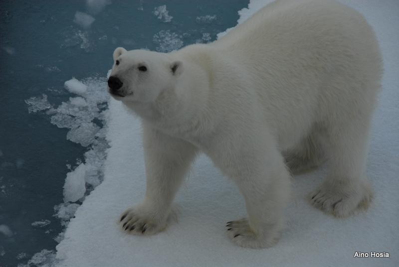 SI_Arctic 24-8-2016