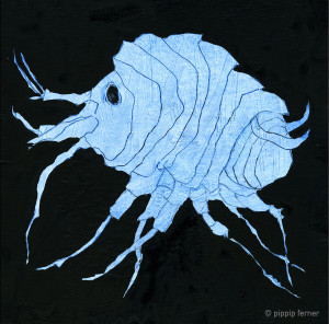 Ferner had no idea in advance that an  amphipod had personality...  © Pippip Ferner