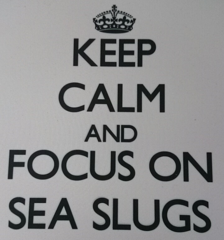 Keep calm and focus on sea slugs