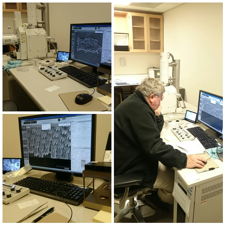 Scanning electron microscope session with Terry