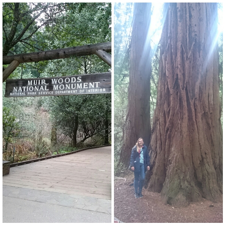The amazing redwood trees at Muir Woods just outside the city