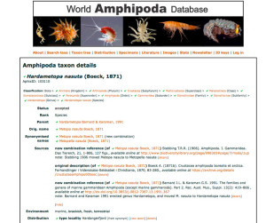 Screenshot from World Amphipoda Database