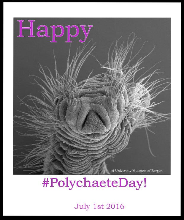 PolychaeteDay