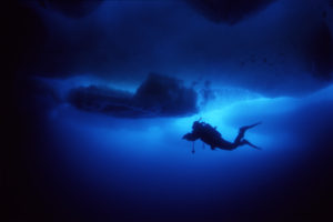 A diver under the sea ice. Photo: Geir Johnsen, NTNU