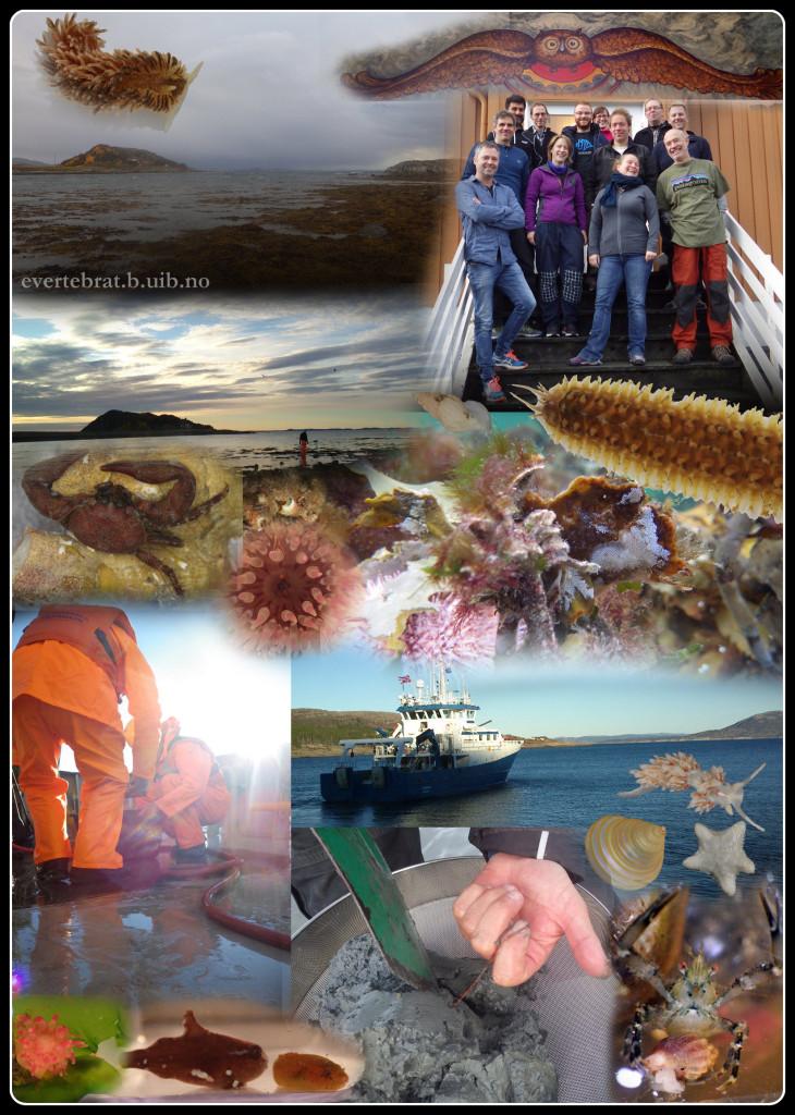 Sletvik_collage