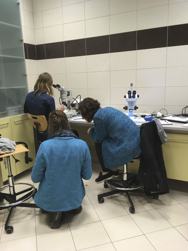 Lauren examines the specimen while Anne-Nina and Tammy checks the literature. Photo: AH Tandberg