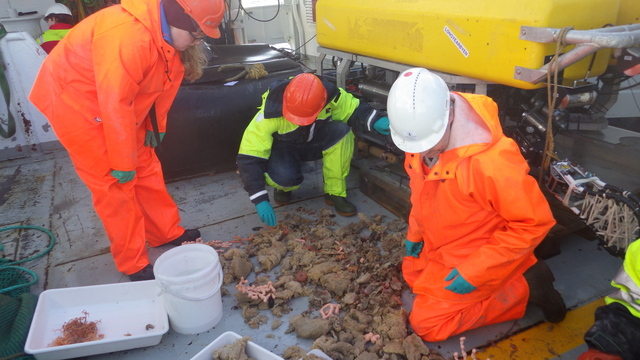 Sorting trawl catch on deck