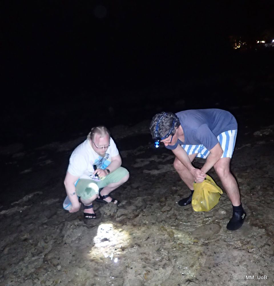 Tidal sampling at night time
