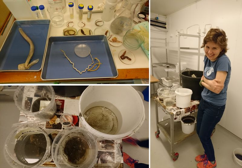 Samples-both brought from Russia, and caught locally - the live specimens are stored in the cold room , and we suffer a little when we og to get them..!